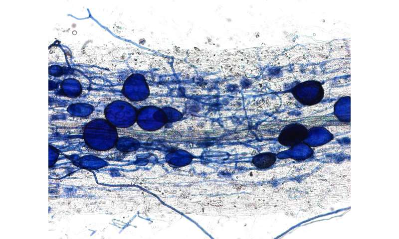 Plants force fungal partners to behave fairly