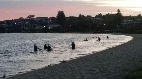 Prawns return to Perth rivers