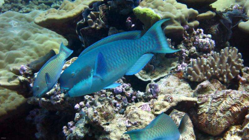 Promoting resilient coral reefs in a changing climate