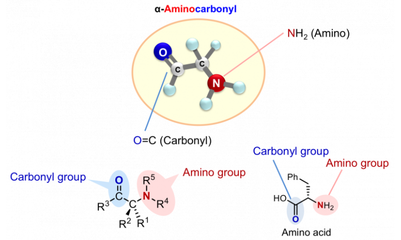 Rapid synthesis towards optically active α-aminocarbonyl therapeutics ~ New catalytic asymmetric reaction directly installs amin