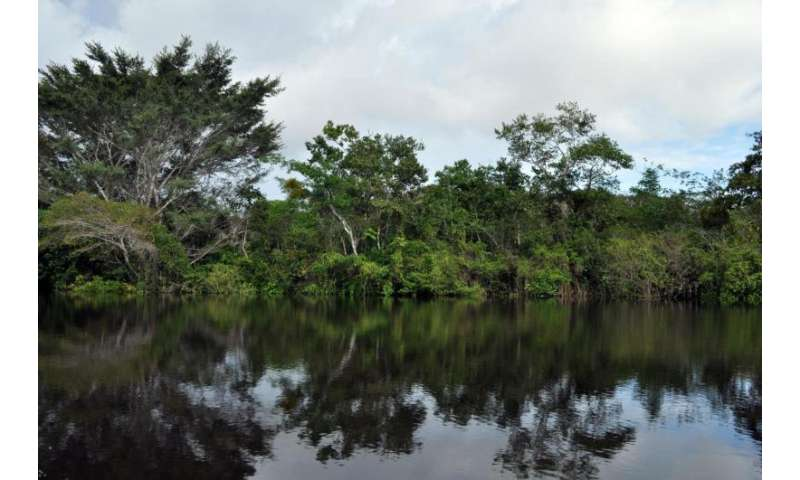 Remote sensing and forest inventories contribute to saving tropical forests
