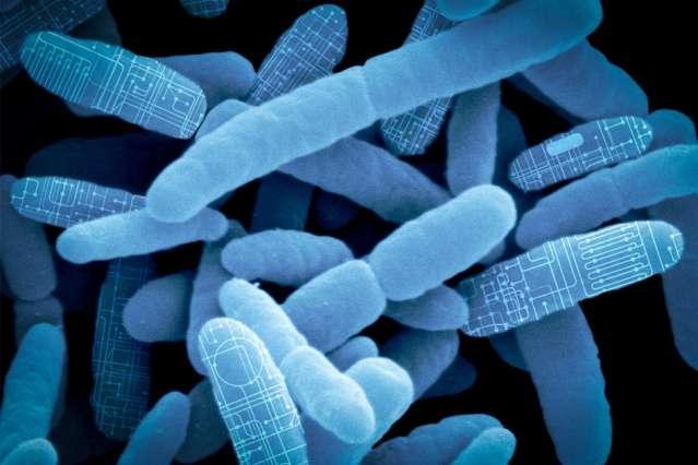 "Reprogramming gut bacteria as ""living therapeutics"""