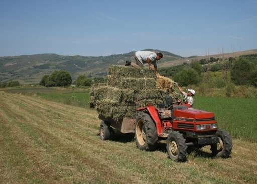 Residents of Kut in Albania bale hay. Many are worried a new dam approved by the Albanian government will engulf their arable la