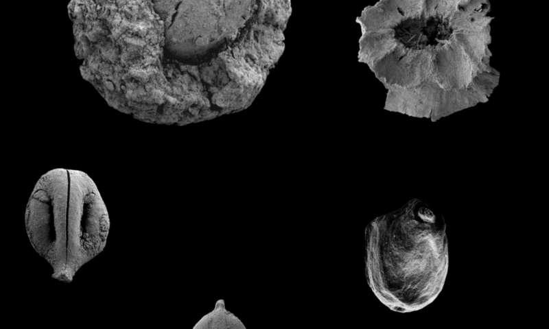 Secrets of the paleo diet: Discovery reveals plant-based menu of prehistoric man