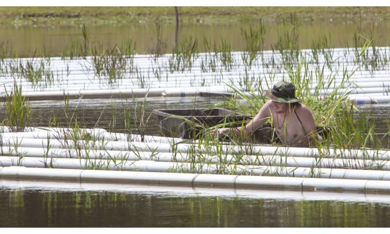Southeastern experiments with floating marshland to clean stormwater runoff