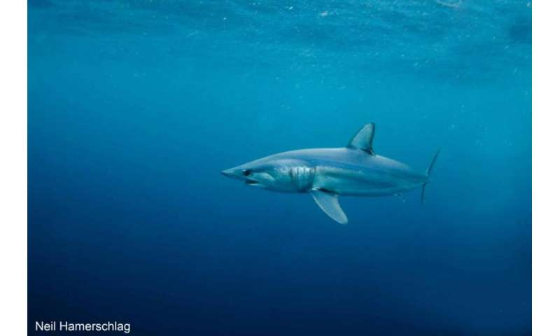 Study finds shark hotspots overlap with commercial fishing locations