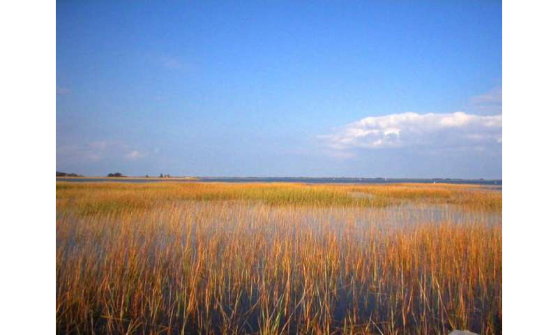 Study predicts salt marshes will persist despite rising seas