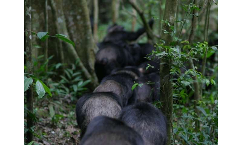 Support from family and friends significantly reduces stress in wild chimpanzees