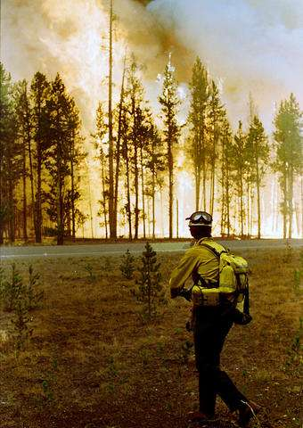 Team studies fires this year in '88 Yellowstone burn areas