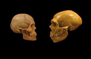 The 2 million year melee—neanderthals vs. humans