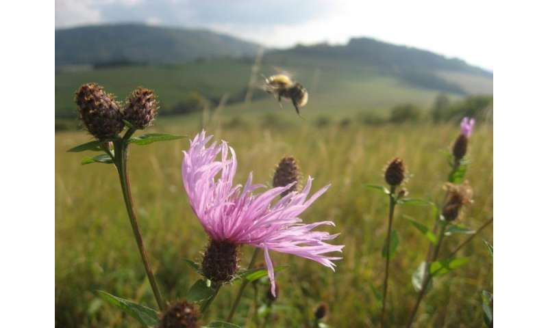 The complex causes of worldwide bee declines