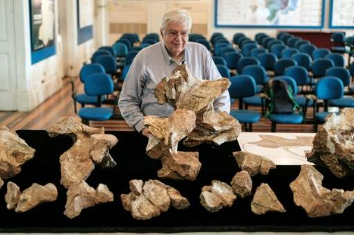 "The Director of Earth Science Museum Diogenes de Almeida Campos shows the biggest piece of fossil of the ""Austroposeidon ma"