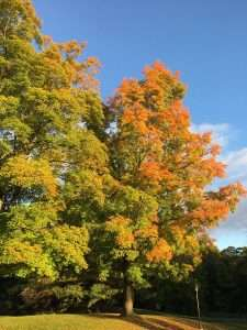 The ecology and economics of autumn leaves