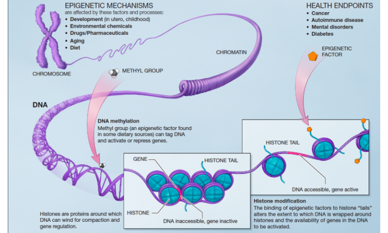 Editorial Sharing Epigenomes Globally >> The Influence Of The Epigenome