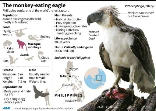 The monkey-eating eagle