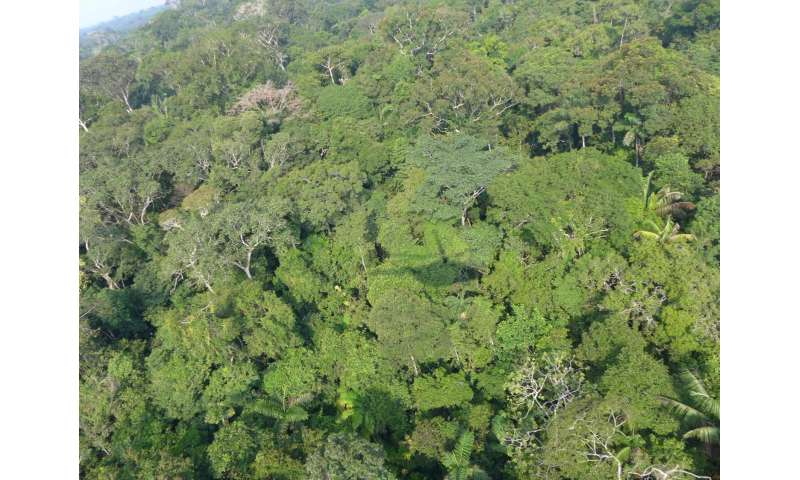 There are so many Amazonian tree species, we won't discover the last one for 300 years