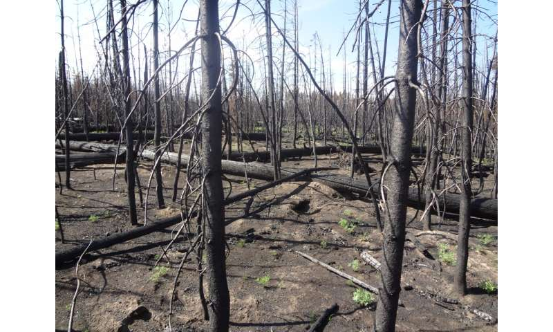Thrive or fail: Examining forest resilience in the face of fires