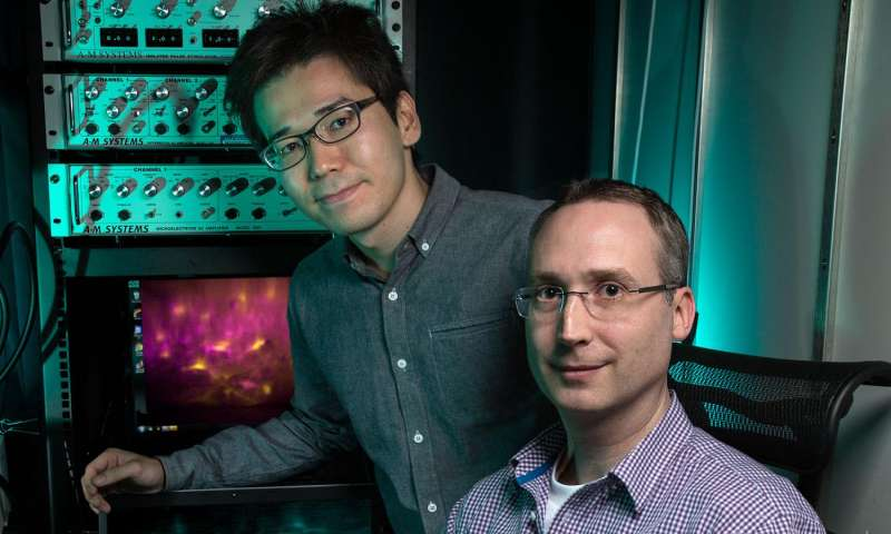 Tiny microscopes reveal hidden role of nervous system cells
