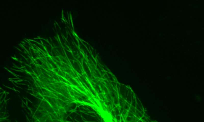 Tiny mirror improves microscope resolution for studying cells