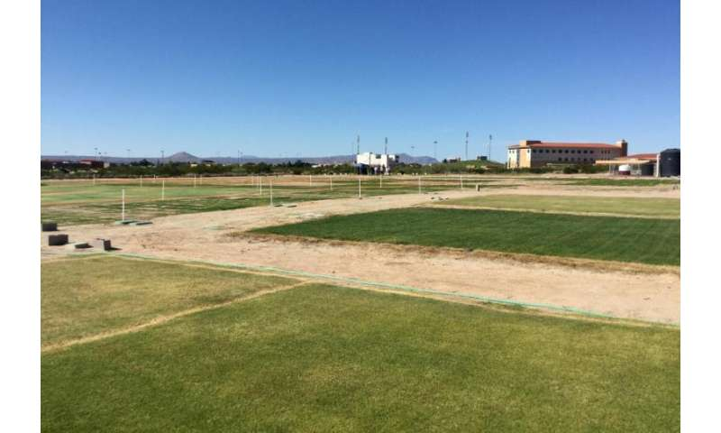 Turfgrass researchers focus on irrigation efficiency, outreach efforts