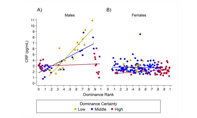 Uncertainty about your social rank might be bad for your health