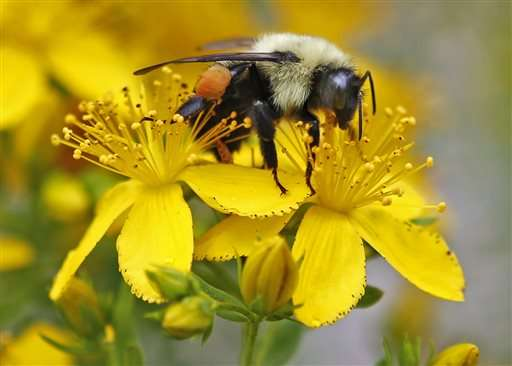 UN science report warns of fewer bees, other pollinators