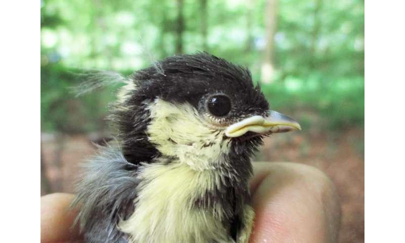 Urban bird species risk dying prematurely due to stress