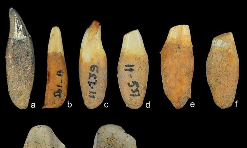 Were Panamanian islanders dolphin hunters?
