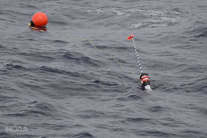 Whales might be hidden, but these new buoys can help find them