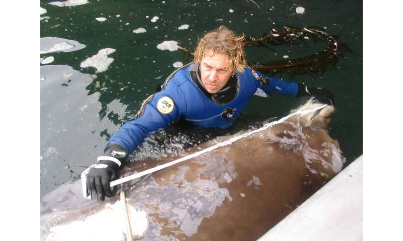 International search reveals genetic evidence for new species of beaked whale