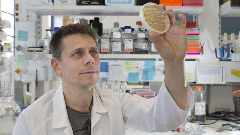 Research finds enzymes essential for DNA repair