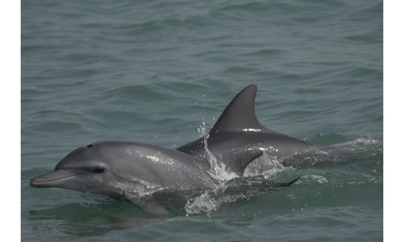 Scientists studying dolphins find Bay of Bengal a realm of evolutionary change