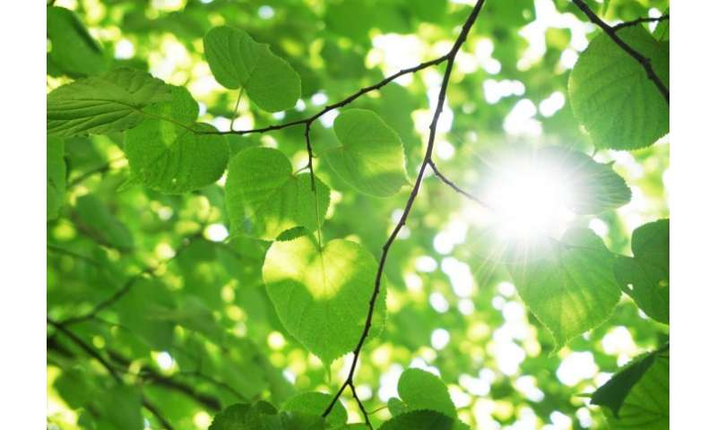 Researchers discover feedback mechanism in photosynthesis that protects plants from damage by light