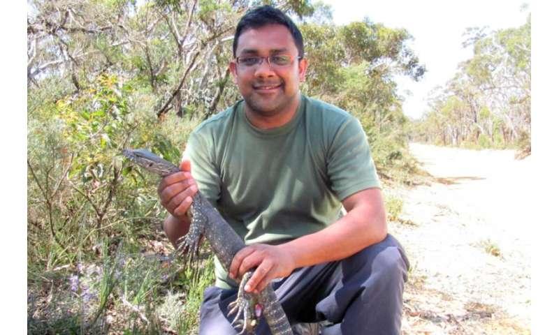 Climate change puts the heat on velvet geckos