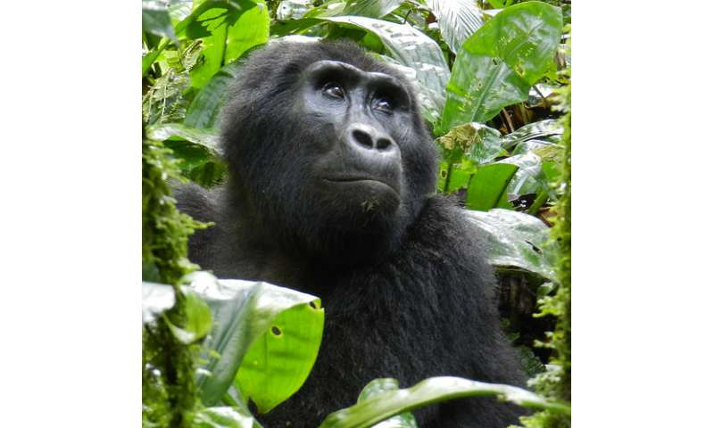 Conservation scientists call for global strategy to halt threatened animal extinctions