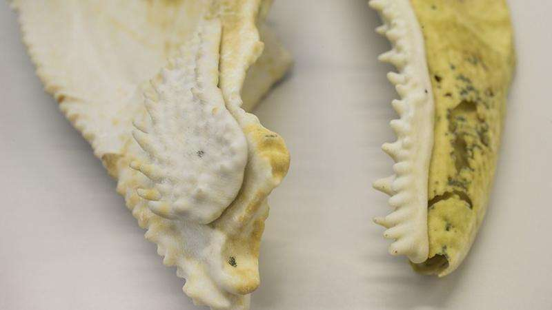 3-D printed fish fossil may reveal origin of human teeth