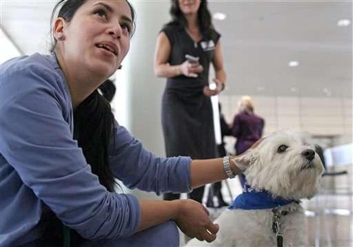 4-legged healers soothe hospital's stressed-out docs, nurses