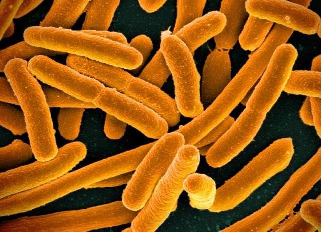 Bacteria's social media