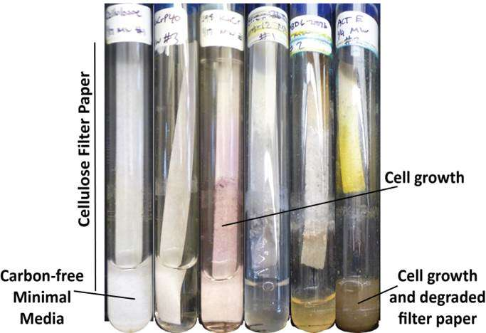 Biofuel research paper