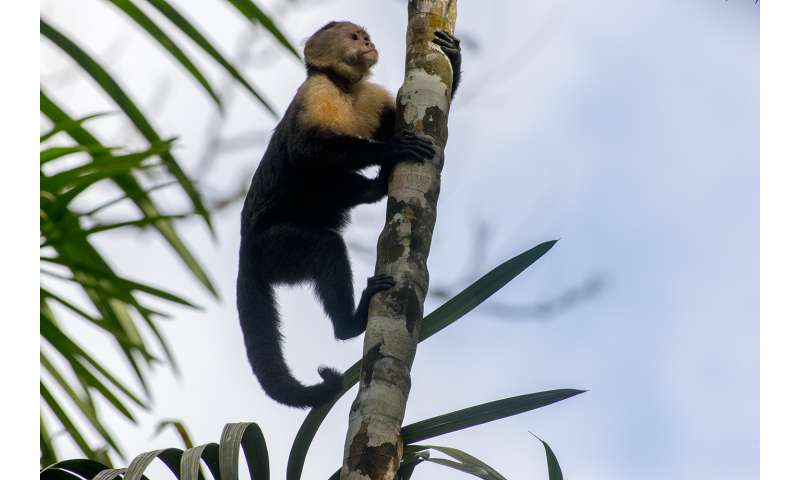 First North American monkey fossils are found in Panama Canal excavation