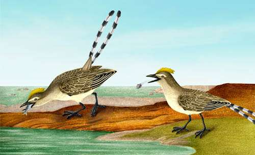 Fish-eating enantiornithine bird provides evidence of modern avian digestive features