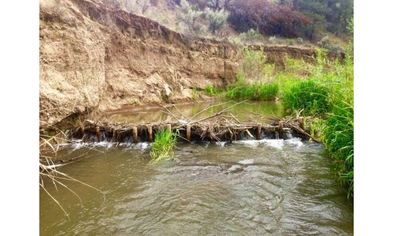 High-tech river studies reveal benefits of habitat restoration for fish