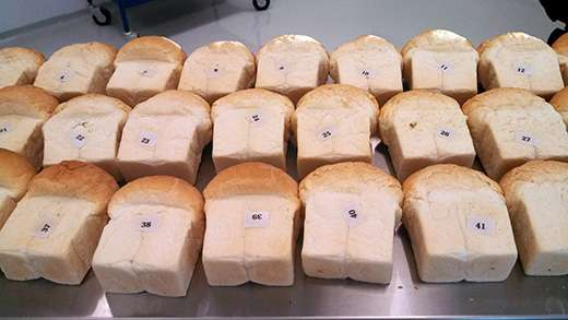How researchers use genomics to predict bread quality and accelerate wheat variety development