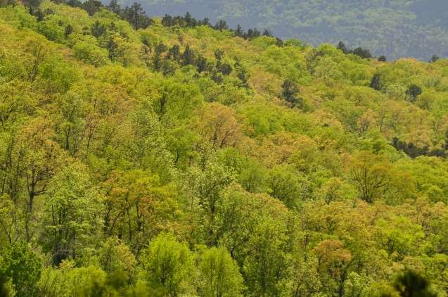 How will shifting climate change U.S. forests?