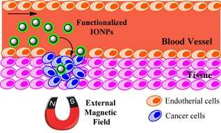 Magnetic nanoparticles show promise in biomedical applications