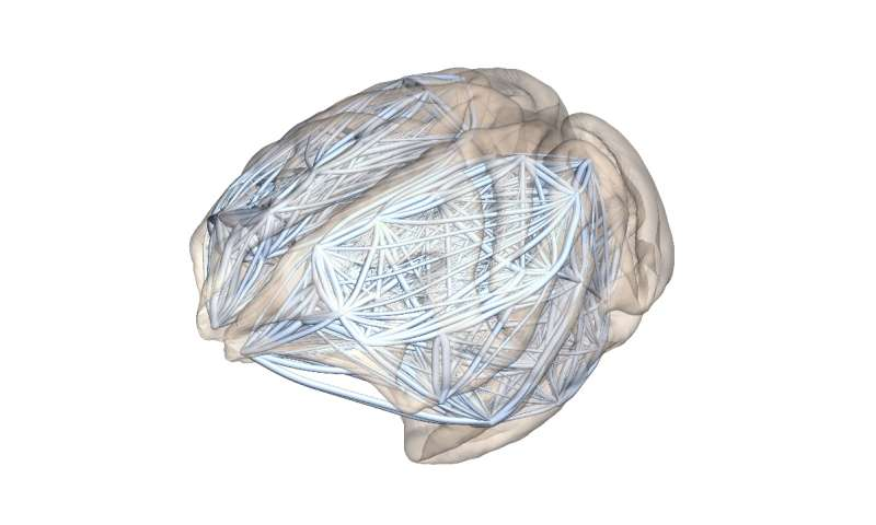 Neural networks -- why larger brains are more susceptible to mental illnesses