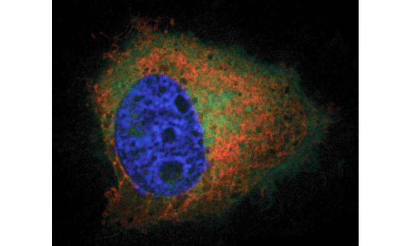 Image result for lipid imaging