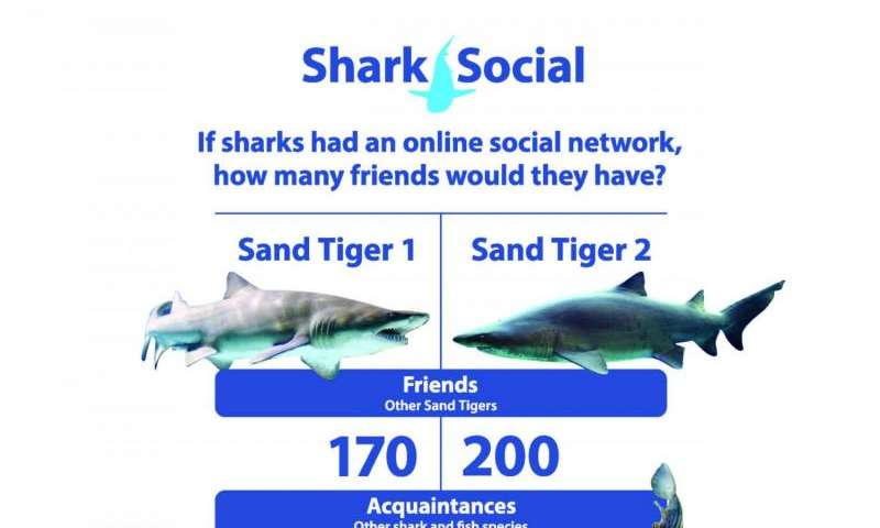 New research reveals surprising social networks of sharks