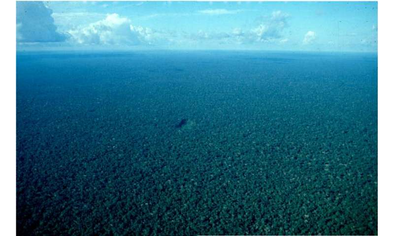 Over-hunting threatens Amazonian forest carbon stocks