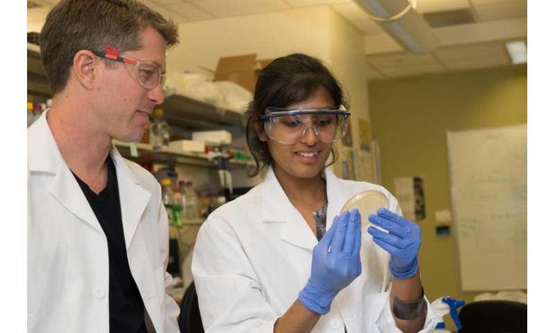 Photosynthetic bacteria give biologists a cool new tool